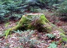 GC5FEGF - Waldspaziergang